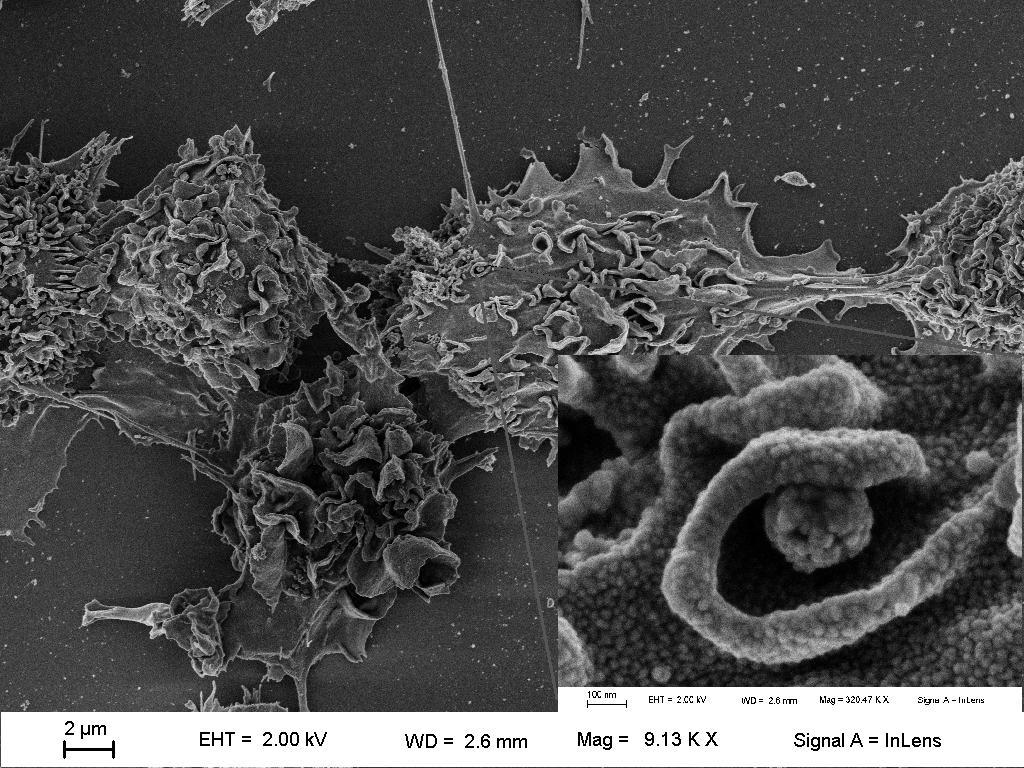 Microscopia foto 1