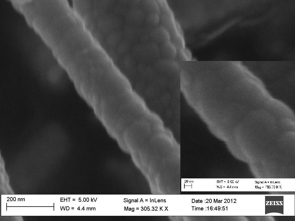 Microscopia foto 6